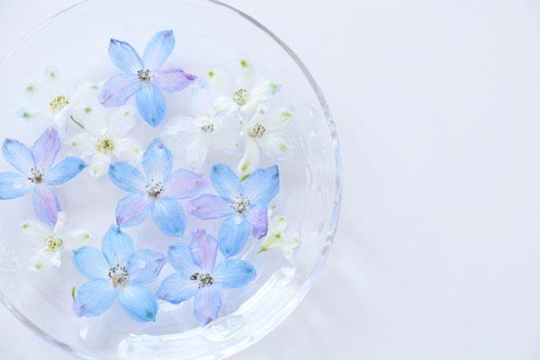 水に浮かべた小さな花